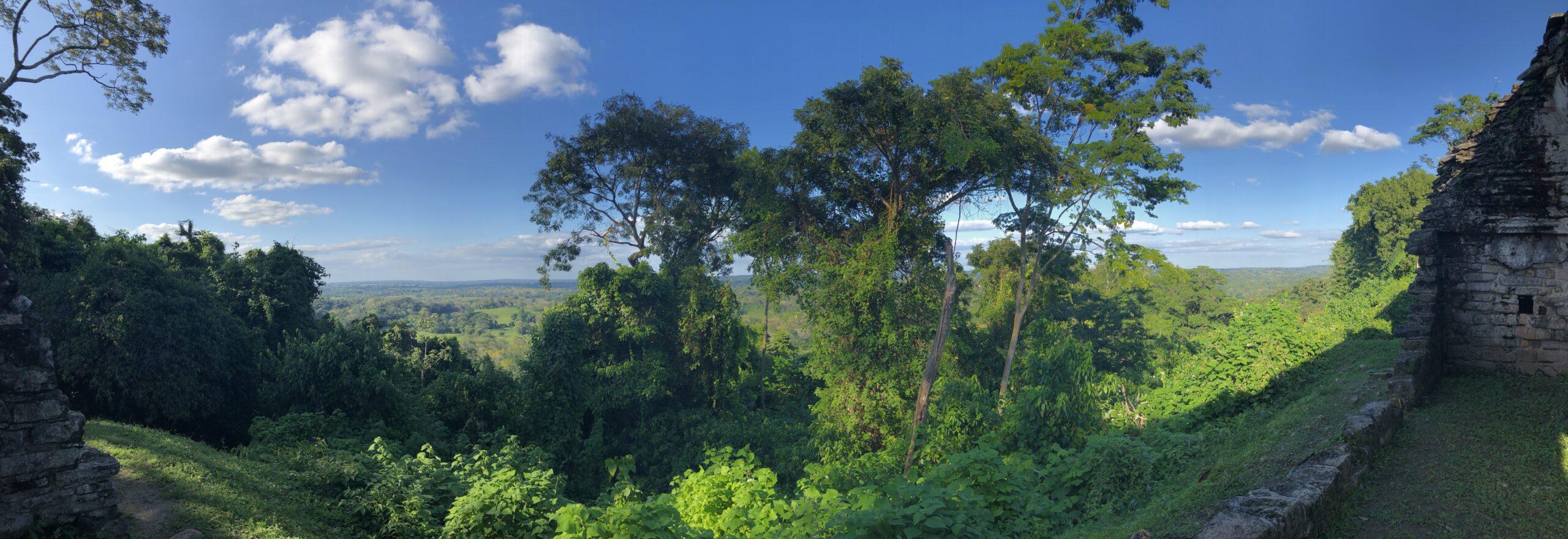 Mecio jungle pannoram